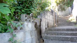 さくらねこ_長崎猫 (33)