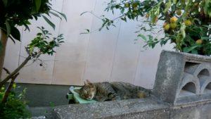 さくらねこ_長崎猫 (15)
