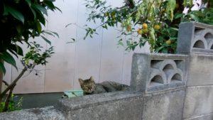 さくらねこ_長崎猫 (14)