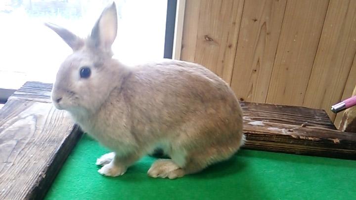 長崎バイオパークのウサギ