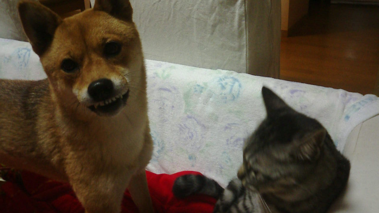 悪巧みする犬