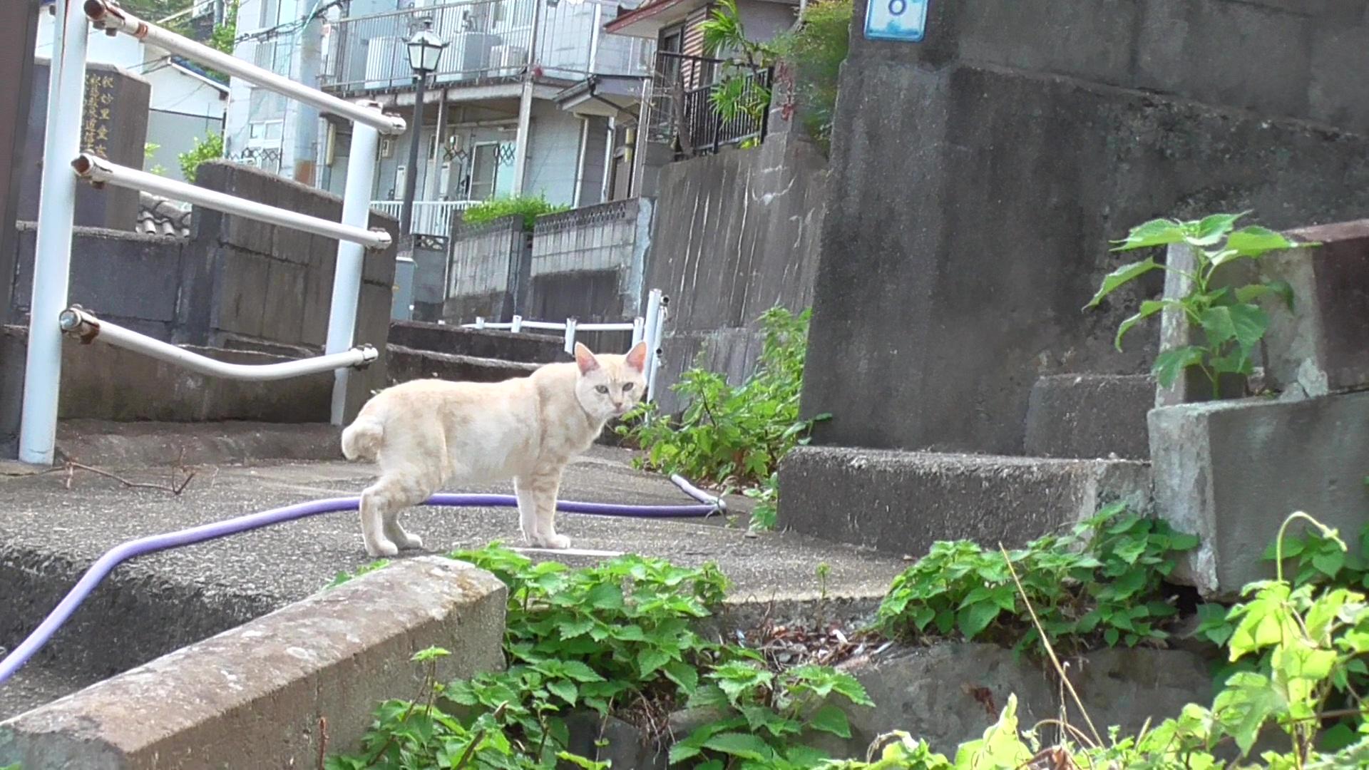 長崎猫2_26
