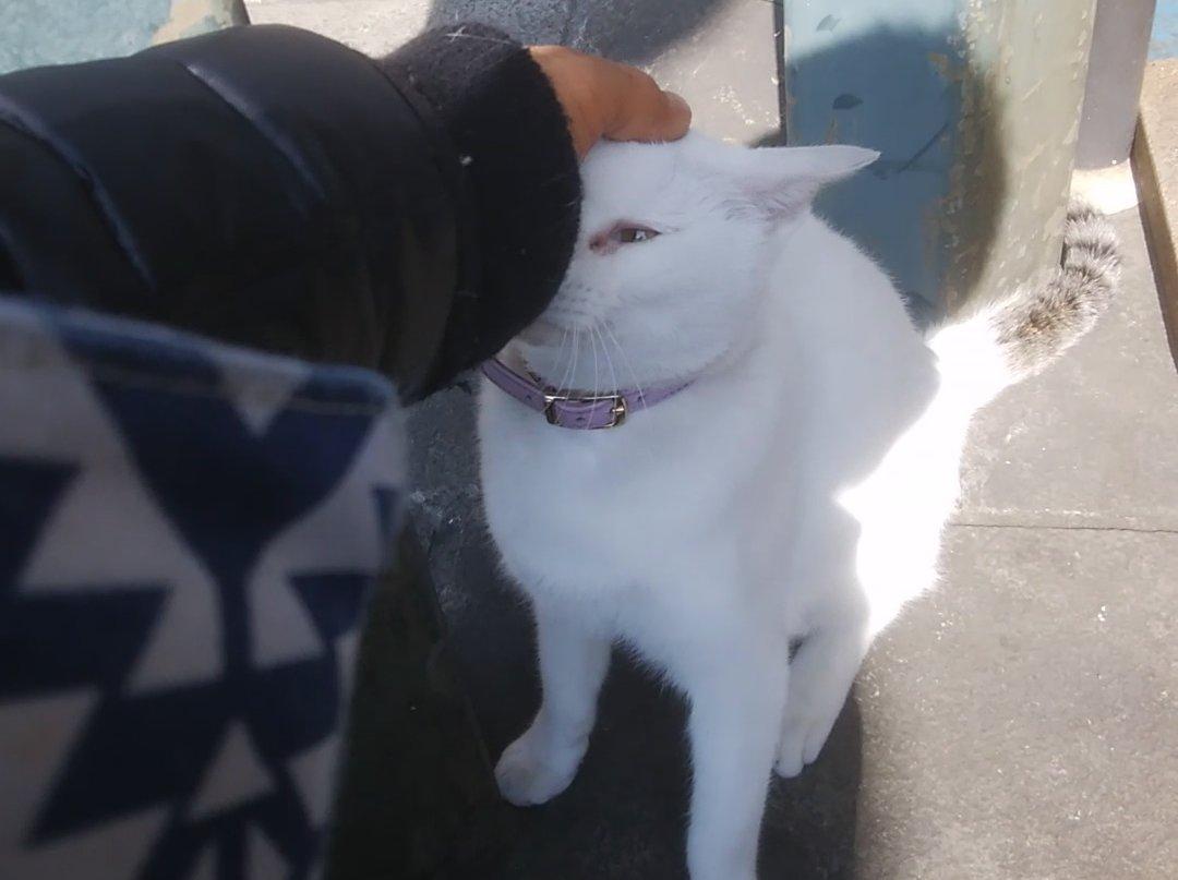 長崎駅前のぬし