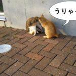 野良の子ネコたち@長崎市民プール周辺
