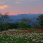 鉢巻山展望所のひがん花